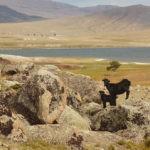 Монгольский Алтай — горная система в юго-восточной части Алтая