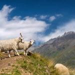 Гора Эльбрус — 32 фото
