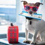 Авиакомпании которые разрешают перевозить животных