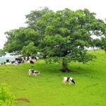 Висконсин известный как «молочная ферма Америки» — 22 фото