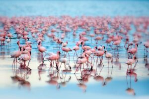Lake Nakuru GettyImages 535882277