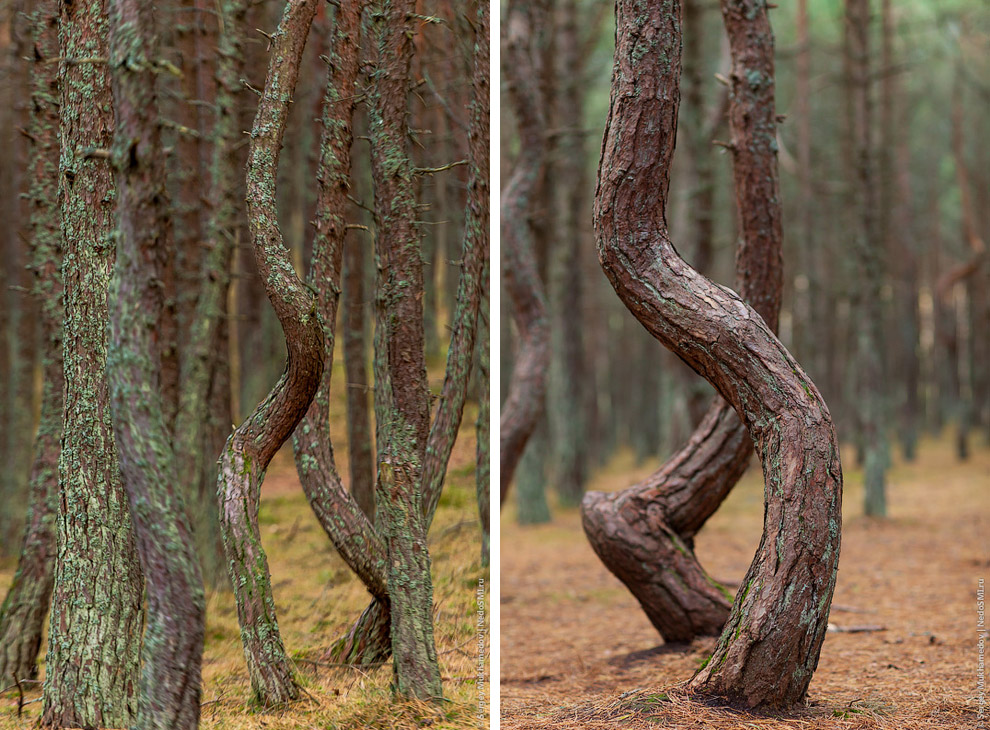 Путешествие по танцующему лесу