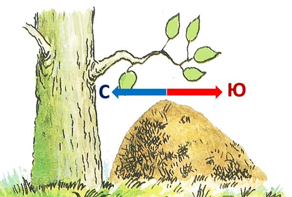 orientacija po muravejniku