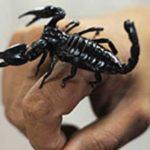Укус скорпиона: симптомы и первая помощь